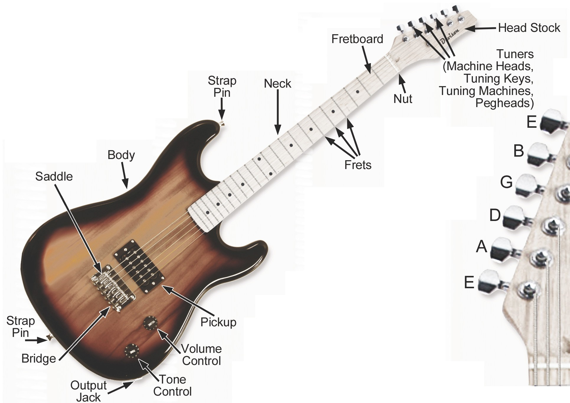 Acoustic Electric Guitar Parts Diagram Best What are the Parts An ...