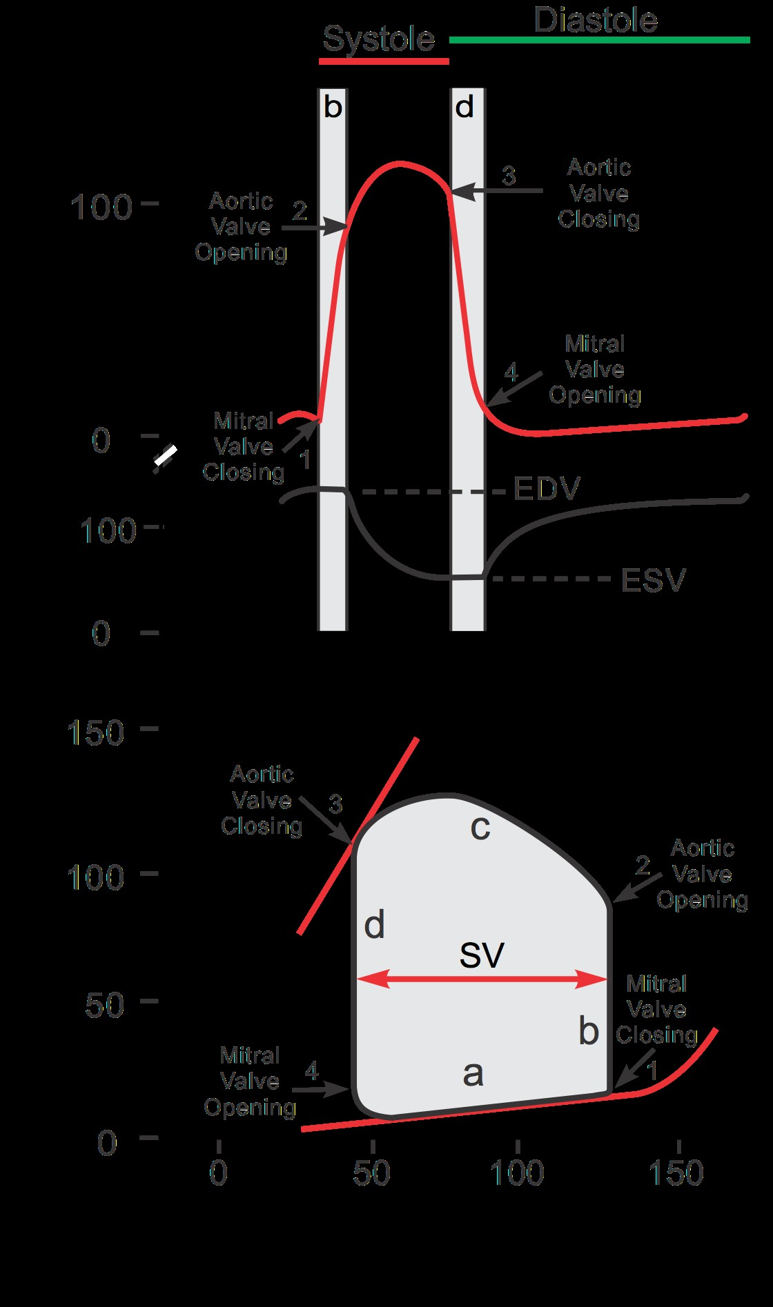 Carnot Engine Pv Diagram Carnot Cycle Of Carnot Engine Pv Diagram