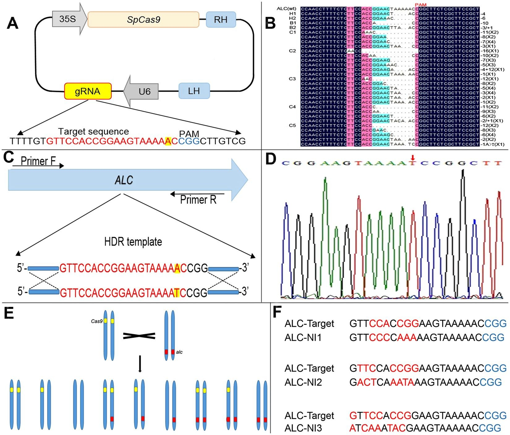 Double Wishbone Suspension Diagram Crispr Cas9 Induced Tar Ed Mutagenesis and Gene Replacement to Of Double Wishbone Suspension Diagram