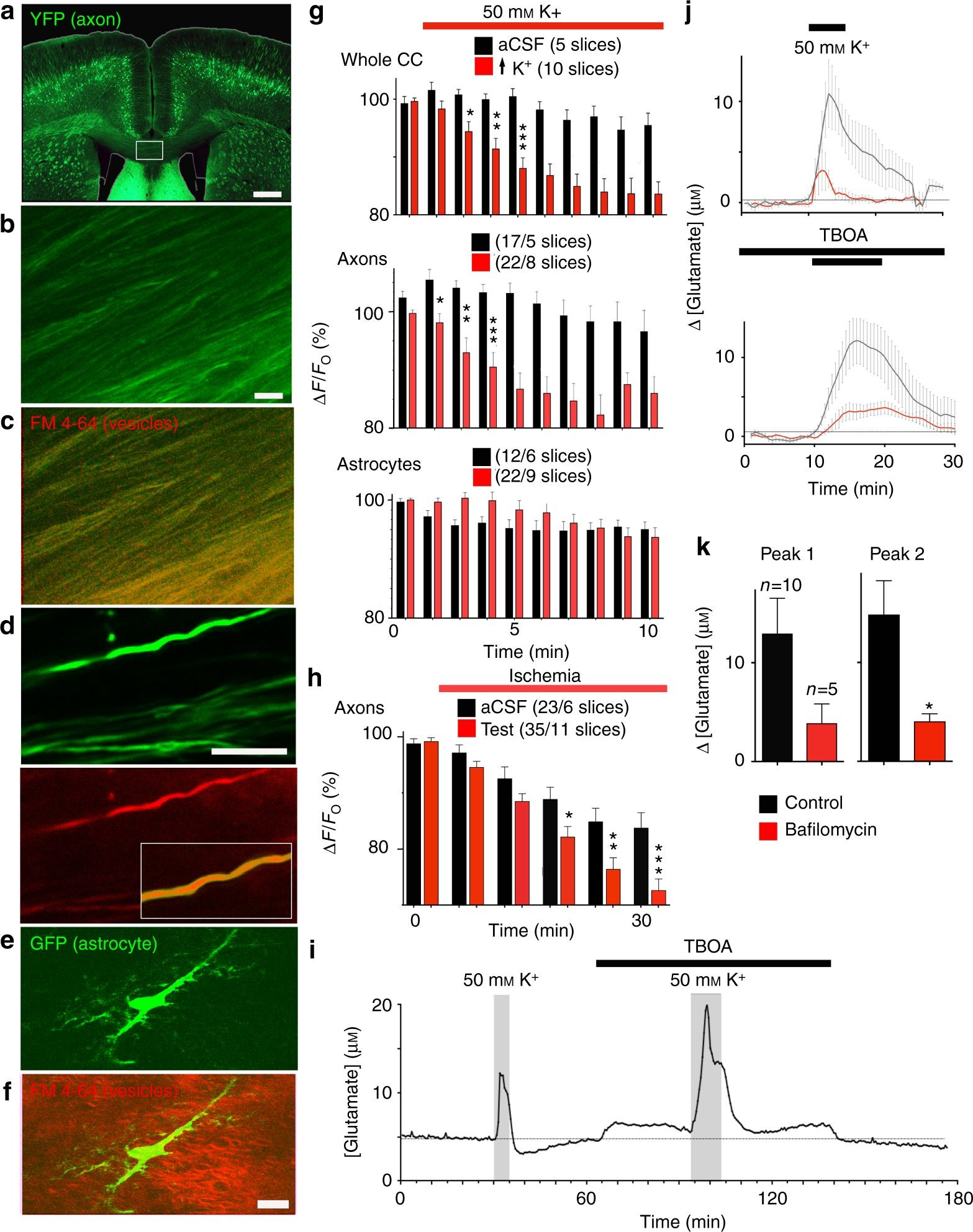 Indicator Diagram Of 2 Stroke Engine Vesicular Glutamate Release From Central Axons Contributes to Myelin Of Indicator Diagram Of 2 Stroke Engine