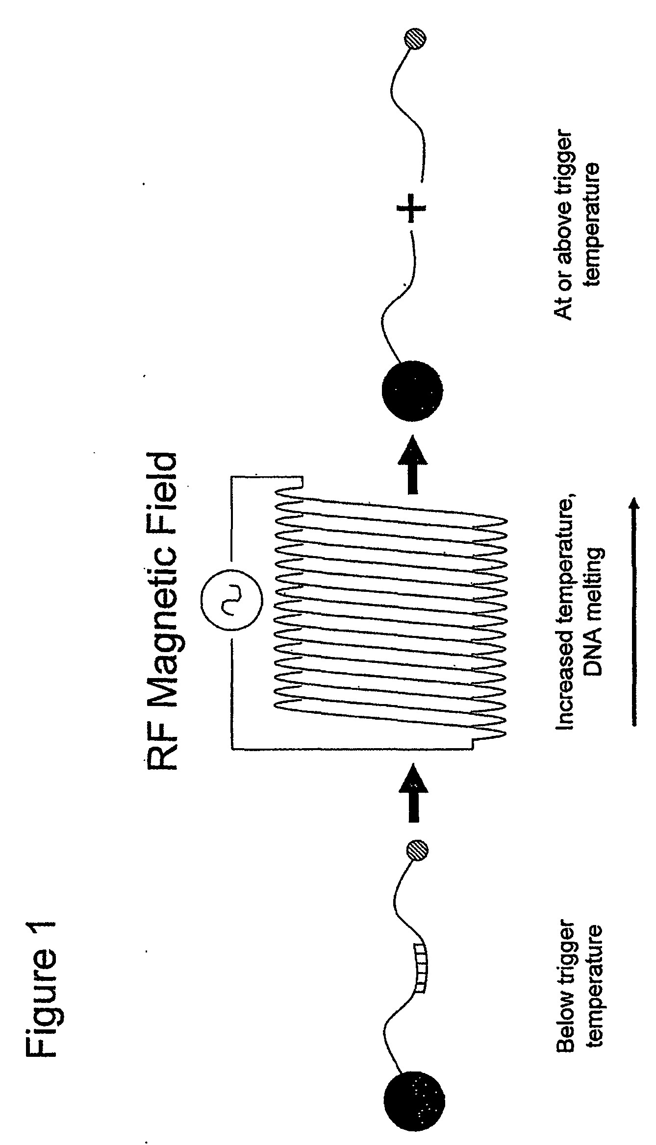 Echo Srm 225 Parts Diagram Wo A2 Delivery Of Nanoparticles and or Agents to Cells Of Echo Srm 225 Parts Diagram